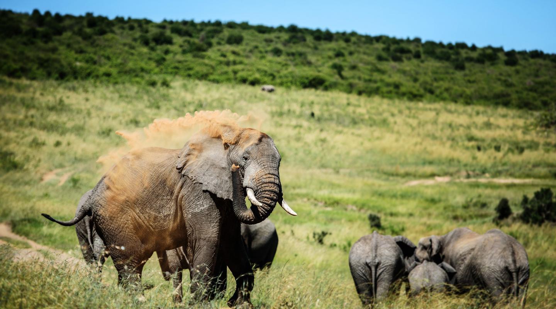 Sepuluh Fakta Satwa Mamalia Liar Terbaik Gajah